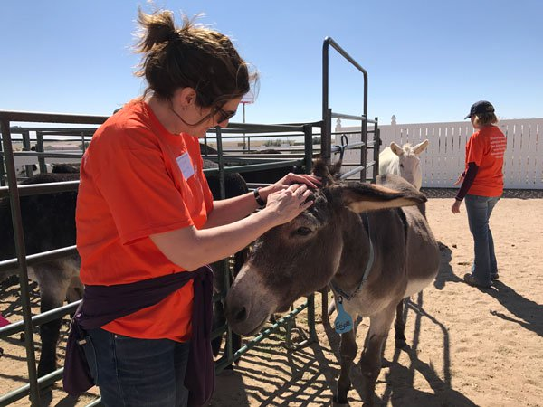 volunteer petting donkey