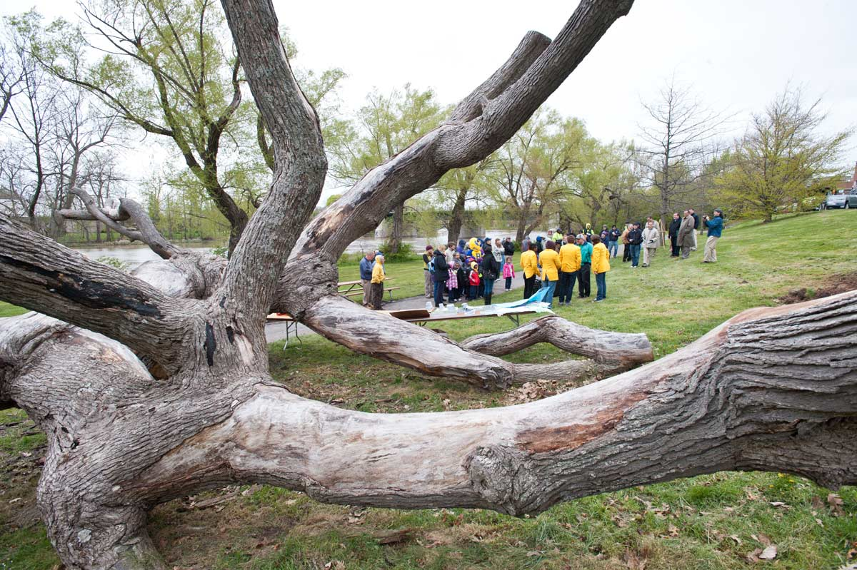 students surround the tree of life during Arbor Day ceremony
