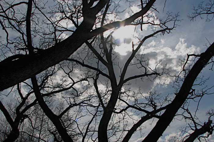 The tree of life essay