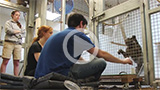 photo of people feeding baboon through cage