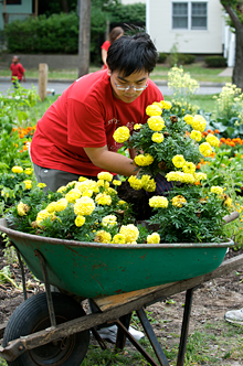 student placing flowers in a wheelbarrow