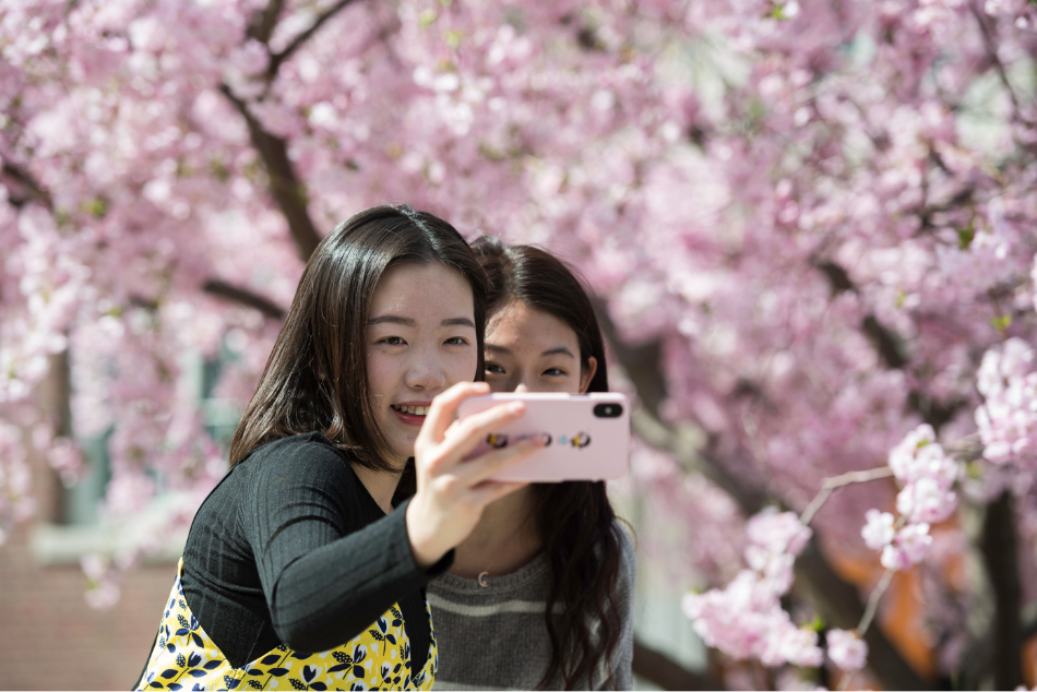 two students taking a selfie under cherry blossoms