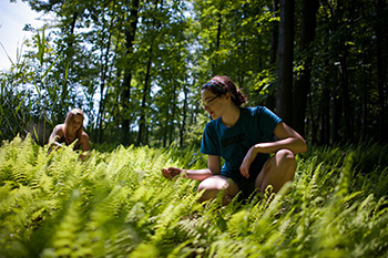 University of Rochester students clear invasive species, maintain trails, and catalog species in a stand of old-growth forest as part of a summer program with the university's Ramsey Lab.