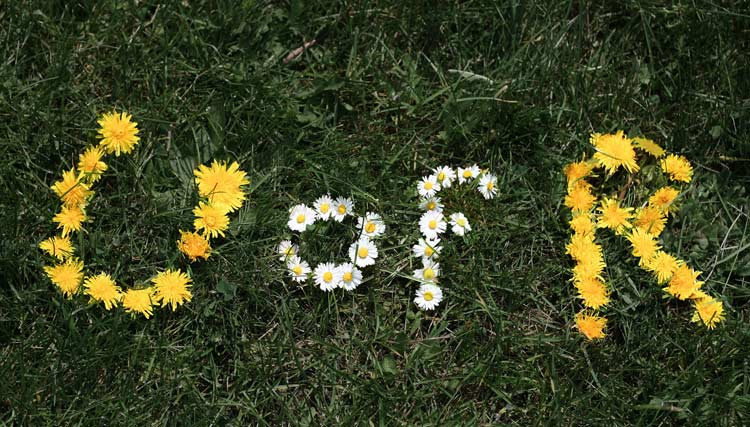 UofR written in dandelions