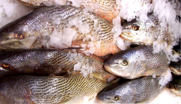University of rochester for Low mercury fish pregnancy