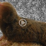 3-MINUTE CLASSROOM: Cure for Cancer in Mole Rats?