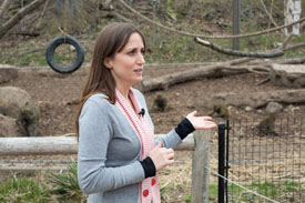J. Adam Fenster, University of Rochester Where Does Math Come From? Jessica Cantlon, assistant professor of brain and cognitive sciences at the University of Rochester, outside the olive baboon enclosure at the Seneca Park Zoo in Rochester, N.Y.