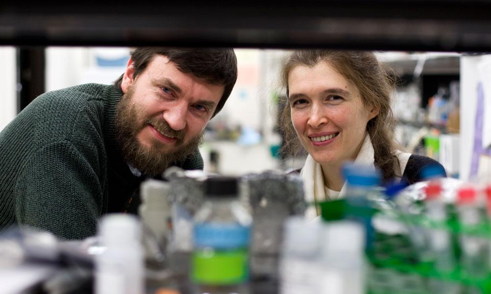Vera Gorbunova and Andrei Seluanov in their lab