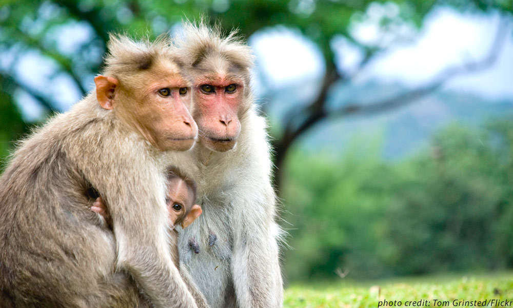 parent and baby monkeys