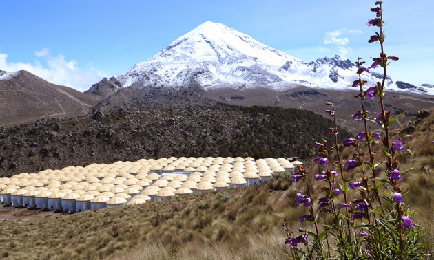 storage tanks, snow-capped mountain and purple flowers