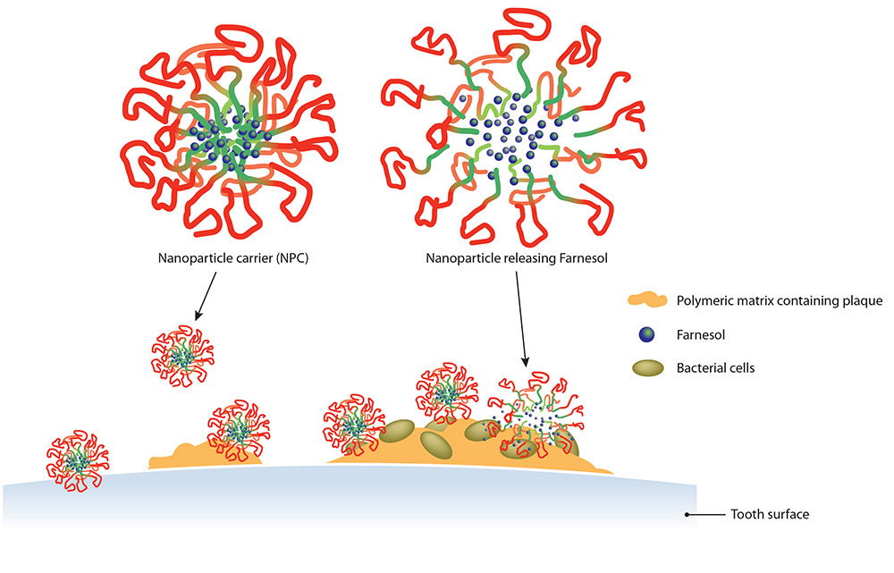 diagram showing nanoparticles releasing farnesol onto the tooth surface
