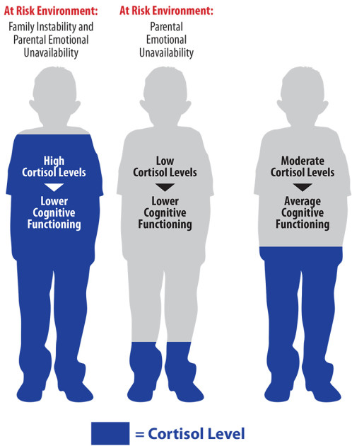 illustration of three people showing low and high cortisol level related to low cognitive function and moderate cortisol levels related to average cognitive function
