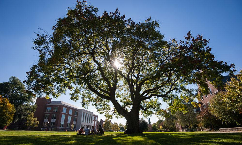 big tree on campus