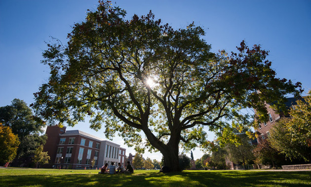 sun streaming through a tree on the quad