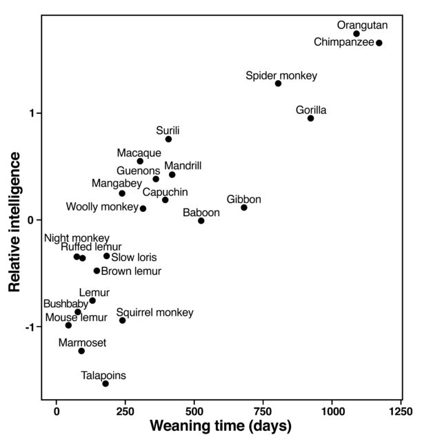 Chart showing relationship between weaning time and intelligence across primate species.