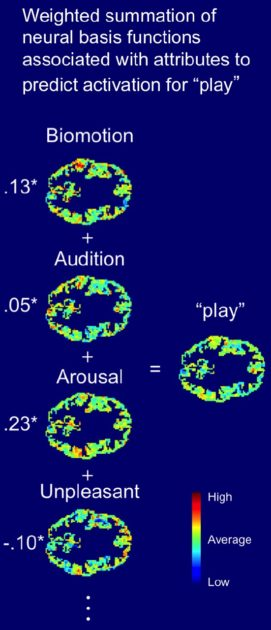"""fMRI scans of the word """"play"""""""