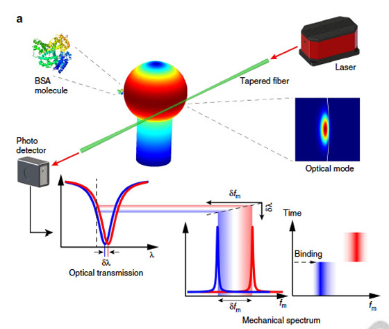 This drawing illustrates the sensing mechanism used by researchers at the universities of Rochester and Victoria, in which an 'optical spring' effect enhances the detection of particles and molecules.