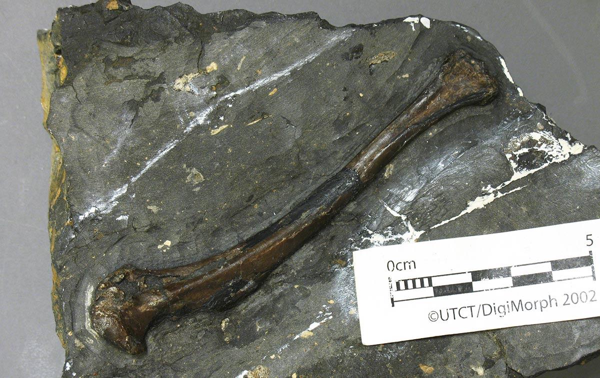 bird fossil in rock