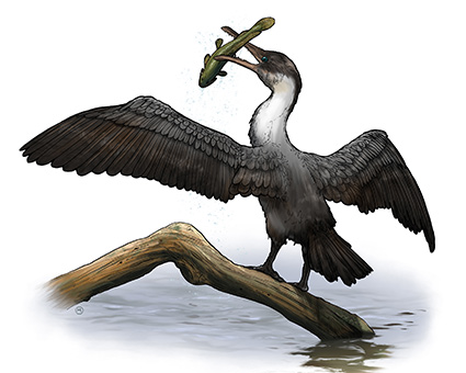 painting of tooth-beaked bird catching a fish