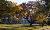 Seven straight years: University recognized as Tree Campus USA