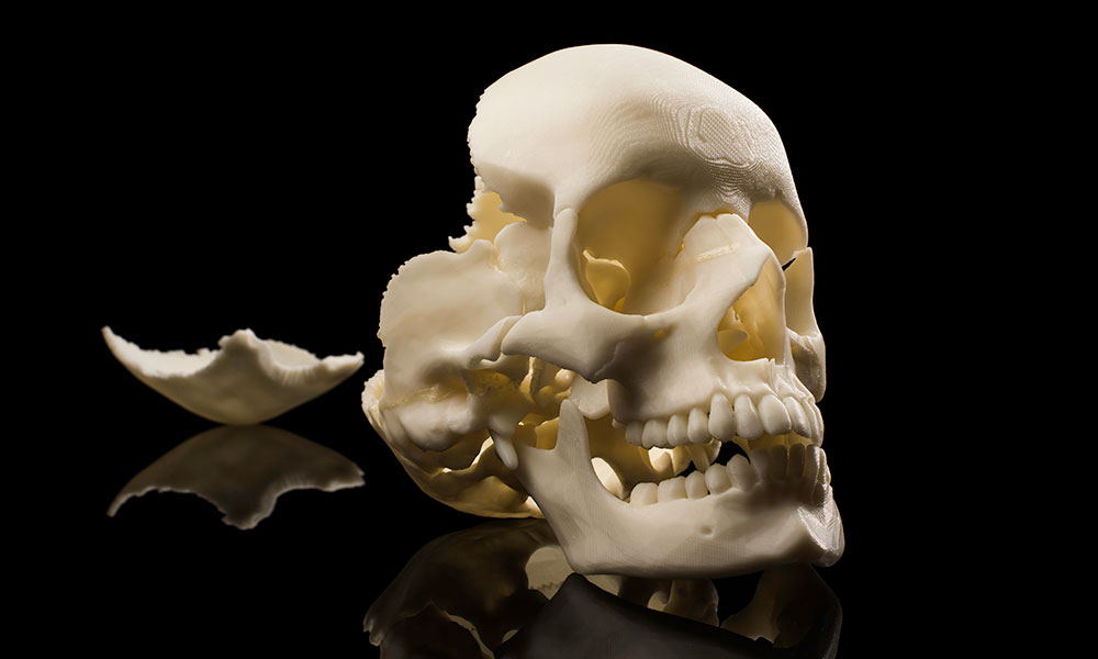 Close up of a human skull made of an 3D printed material.