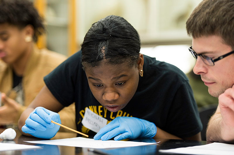 student looks intently at fruit fly specimins