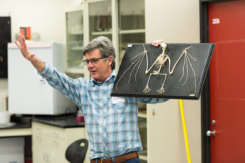 professor holds up skeleton of a bat