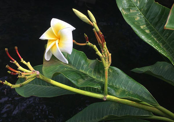 a white and yellow flower, green leaves and stems