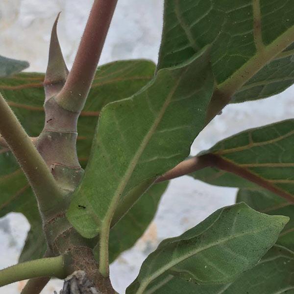 closeup of a leafy plant
