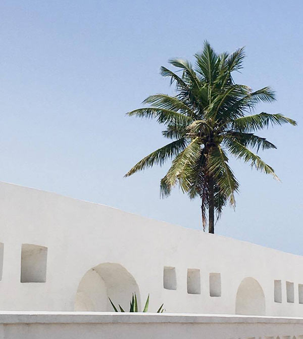 a palm tree rising over a whitewashed structure with arches