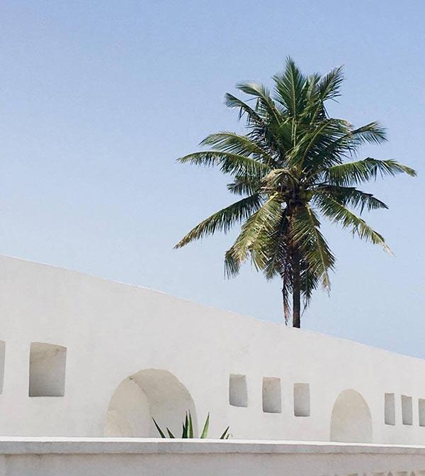 Old Slave Castles An 'asylum' For Nature : NewsCenter