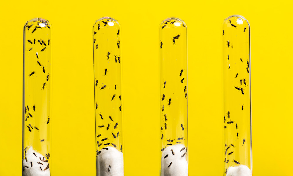 four test tubes filled with wasps