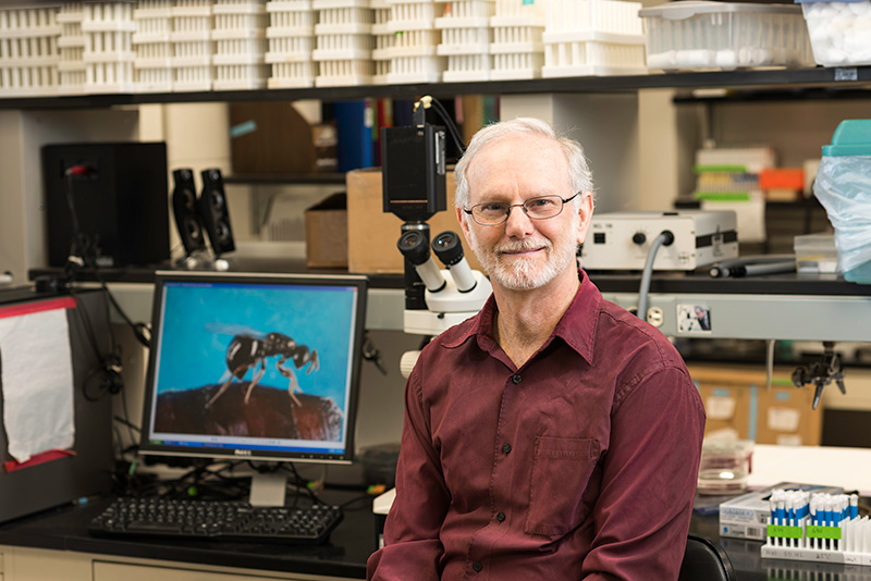Jack Werren in his lab, sitting in front of a computer image of a wasp
