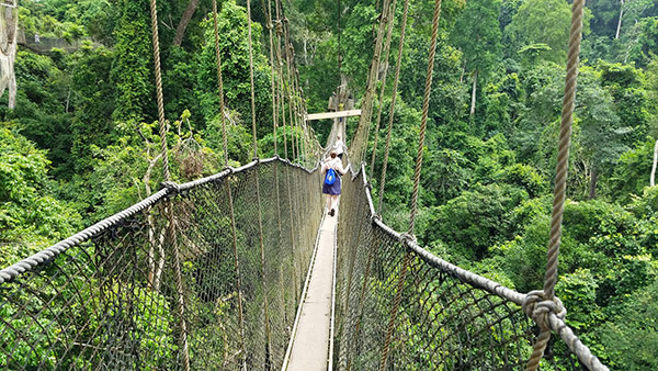 walking across rope bridge in the trees