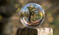 A glass ball perched atop a wooden post reflects a tree in the woods.
