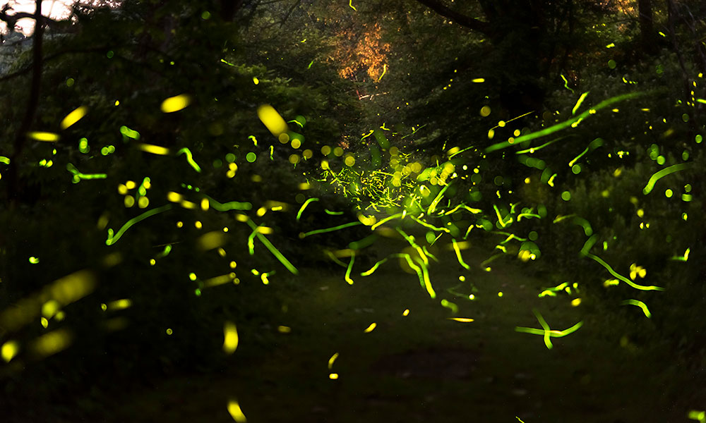 streaks of firefly light in a dark forest