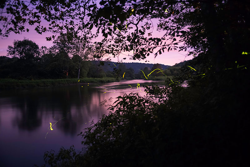 streaks of firefly light over a river at dusk