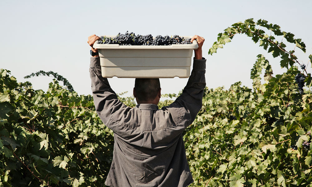 man carrying a box of grapes over his head