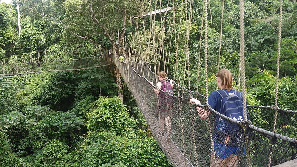 Students traverse a rope bridge