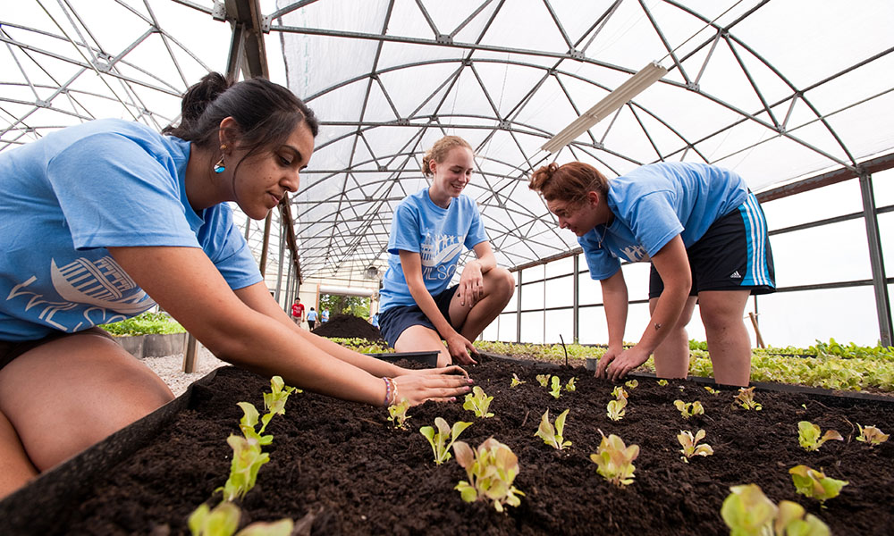 Student volunteers planting lettuce for Wilson Day, a day of community service