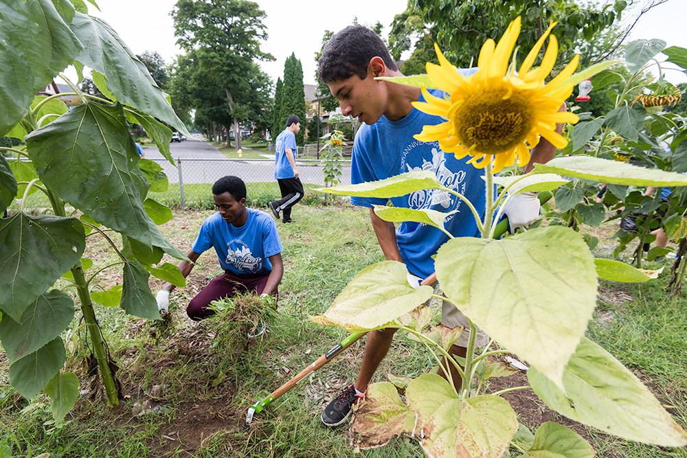 two students weeding around a large sunflower