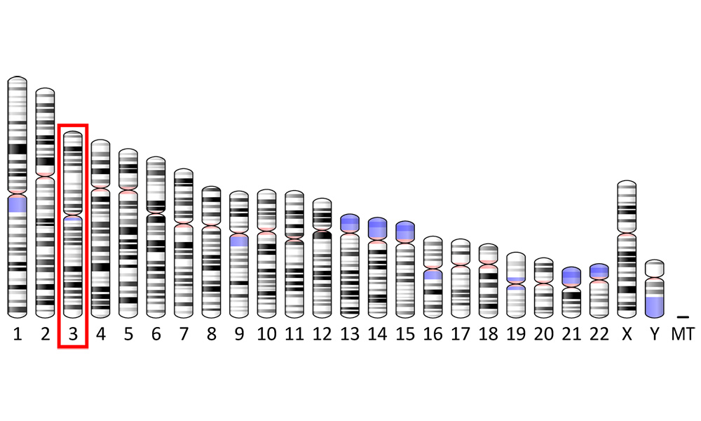 diagram of human genome, with Chromosome 3 circled