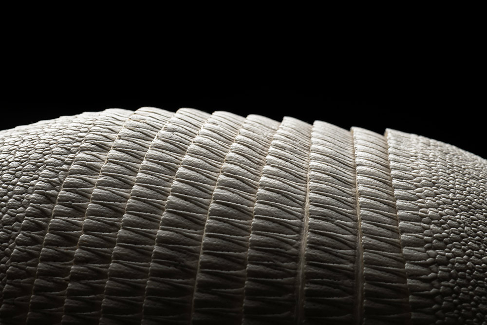 close up detail of an armadillo's scales