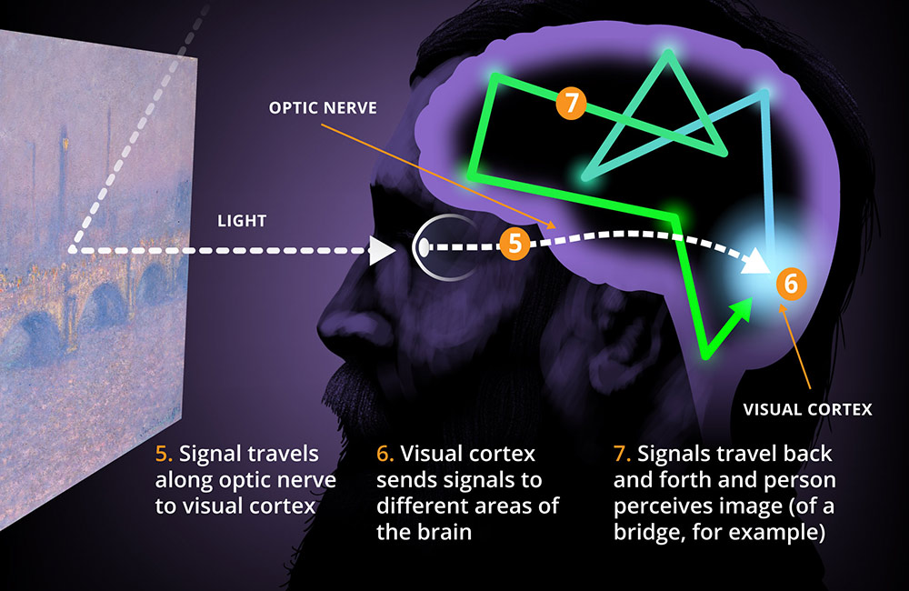 illustration shows Monet's face looking at a painting with parts of the eye and brain labeled five through seven. 5: Signal travels along optic nerve to visual cortex. 6: Visual cortex sends signals to different areas of the brain. 7: Signals travel back and forth and person perceives image (of a bridge, for example)