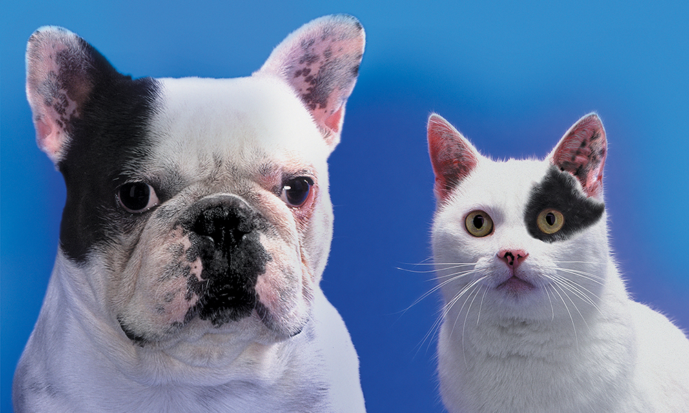 a black and white dog and a black and white cat stare out at the camera, illustrating two things that look alike but are different