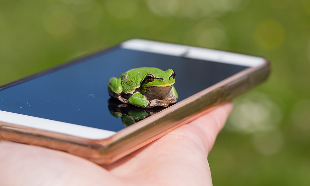 frog sitting on a cellphone