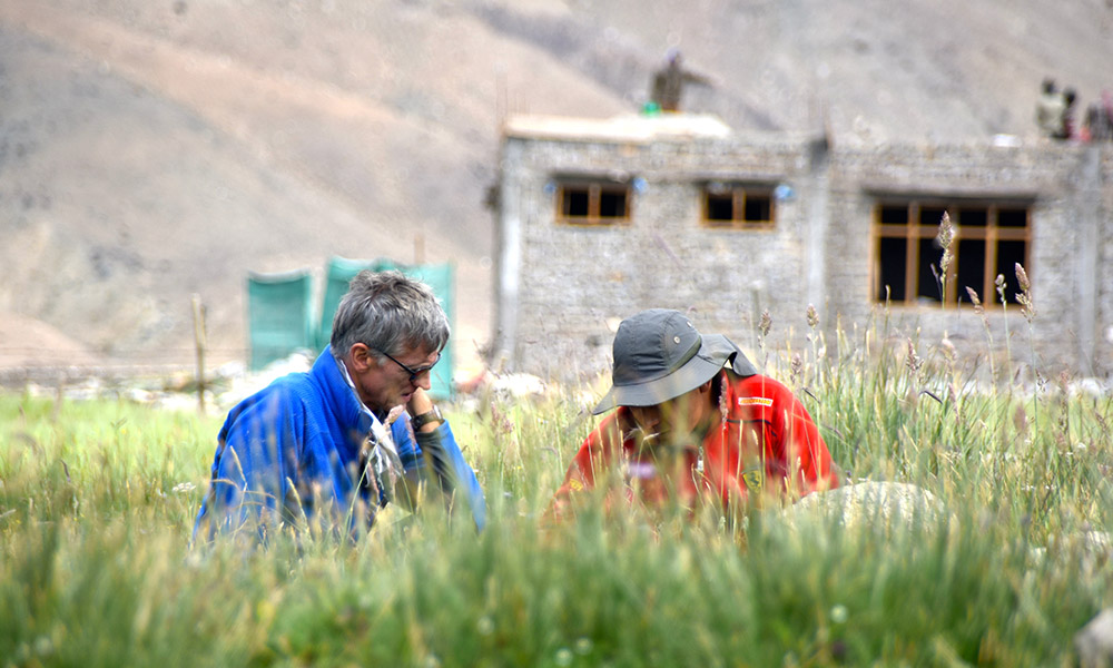 two researchers in the field, tall grass in the foreground, buildings in the background.