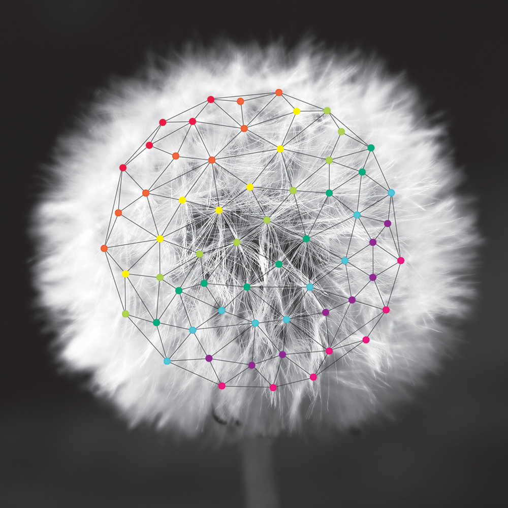 dandelion with fuzzy seeds with the seeds connected by colorful geometric designs.