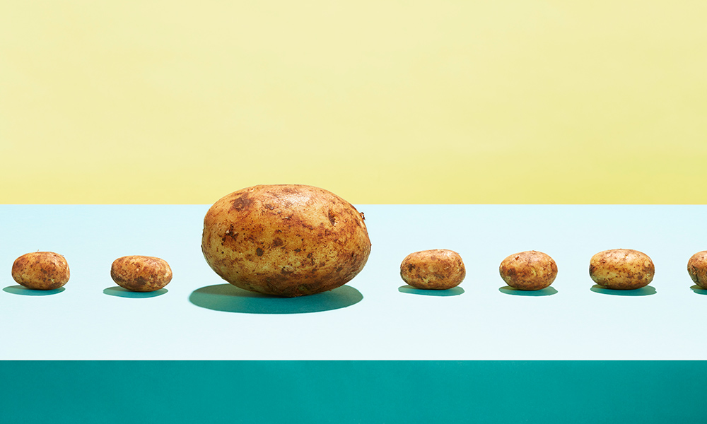 a row of small, normal potatoes with one huge potato to illustrate the concept of genetically modified food