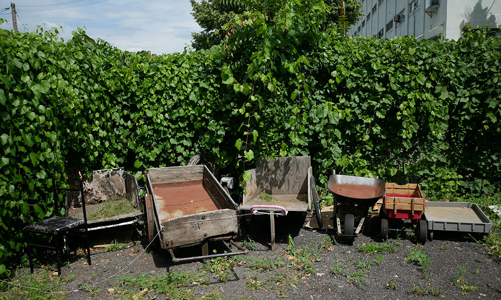 Wheelbarrows, chairs, and other materials lined up in front of a green hedgerow.